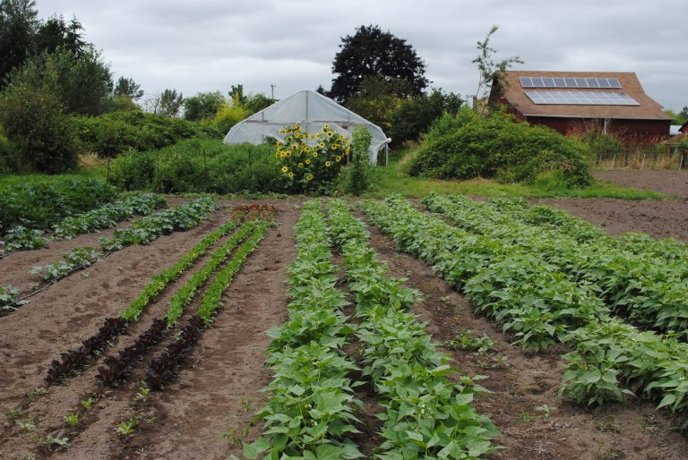 Protected farmland acres in the Stillaguamish Valley surpass 400