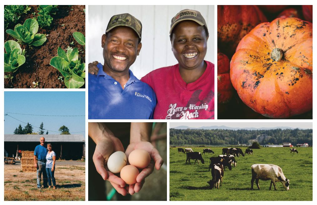 Montage of seasonal farm images and local farmers.