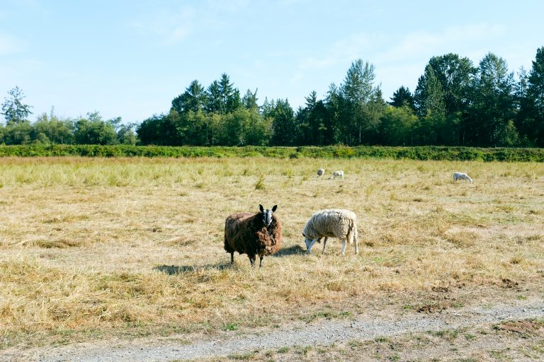 Getchell Ranch protected forever, honoring the legacy of its long-time steward